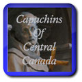 Capuchins of Central Canada